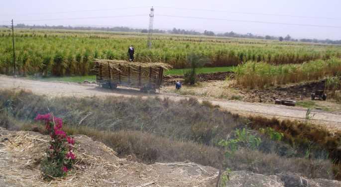 Поля в долине Нила