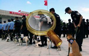 Служебные собаки на службе в КНР